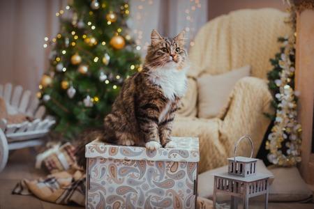 Cyperse kat speelt op de kerstboom, kerstvakantie