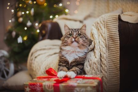 Cyperse kat speelt bij de kerstboom, kerstvakantie
