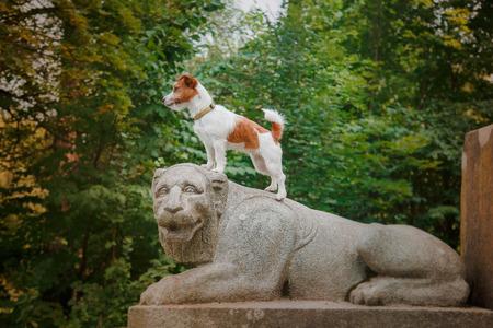 Vrolijke hond Jack Russell Terrier spelen