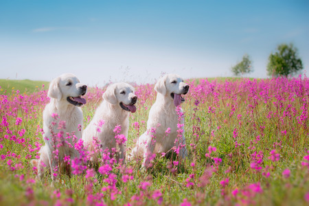 beautiful dog in flowers field, on the nature of motion Stock Photo