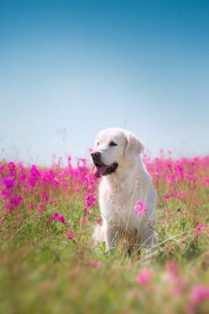 mooie hond in bloemen veld, over de aard van de beweging