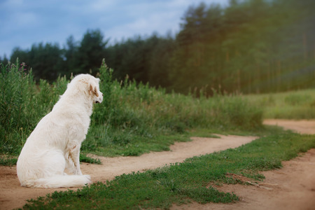 Dog on summer nature beautiful  on nature Banco de Imagens