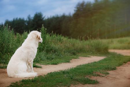 Hond op de zomer de natuur mooi op de natuur Stockfoto