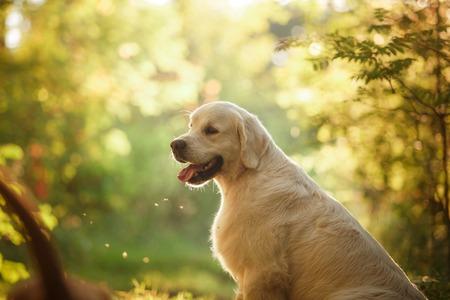 the dog for a walk, nice, gentle Standard-Bild