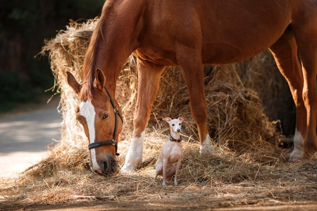 foal: A mare and a dog in a haystack