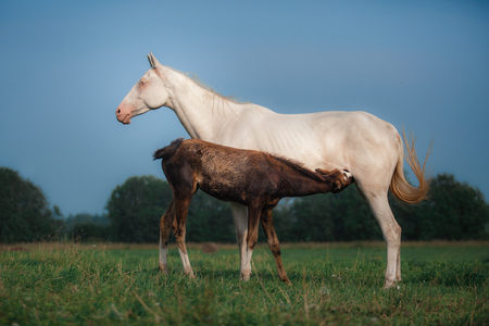 mare: Mare and foal in the field outdoors