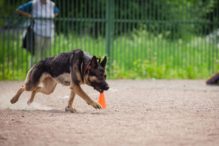 police unit: dog competition, police dog training, dogs sport, sports competition