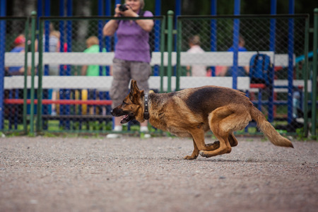 dog competition, police dog training, dogs sport, sports competition