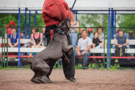 watchdog: dog competition, police dog training, dogs sport, sports competition