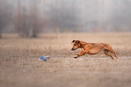 Dog catching flying disk, pet playing outdoors in a park. Reklamní fotografie