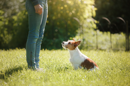 Girl playing with a dog. Jack Russell Terrier in nature. Summer day Stock Photo