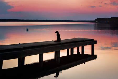 dog at the pier at sunset. pet in nature