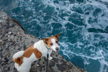 dog on the sea. Jack Russell Terrier stands on a stone and looks at the water. Italy, promenade, beach