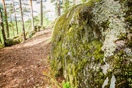 moss texture Imagens