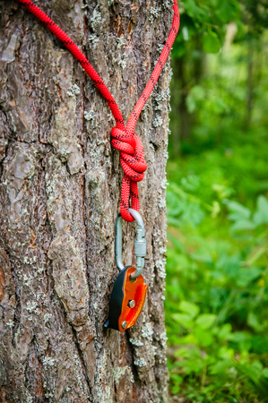 rope with a carabiner on a tree trunk Reklamní fotografie