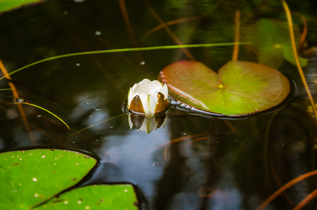 water lily in the forest