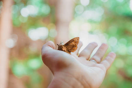 A moth sits on the palm against a background of greenery. The hand releases the night butterfly to freedom