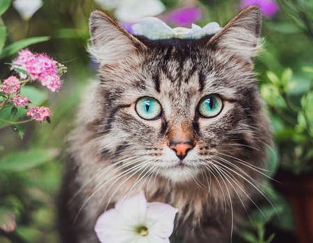 Portrait of a striped cat's head in flowers. Walking Pets in nature in the Park Imagens