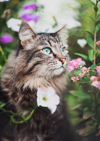 A tabby cat is sitting in the garden and sniffing flowers. Walking Pets in nature in the Park