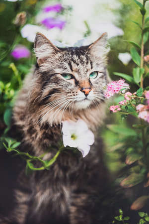 A tabby cat sits in flowers and looks slyly at the camera. Walking Pets in nature in the Park