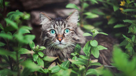 A tabby cat sits in the garden and looks out of the bushes. Walking Pets in nature in the Park Imagens