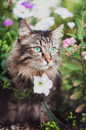 A tabby cat walks on a leash in the grass and flowers. Walking Pets in nature in the Park Imagens