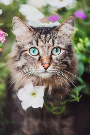 Portrait of a tabby cat in grass and flowers. Walking Pets in nature in the Park