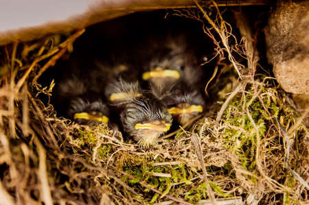 five baby birds sitting in the nest