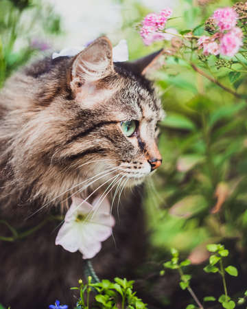 A tabby cat sits in profile among the greenery and flowers in the garden in summer. Walking Pets in nature in the Park