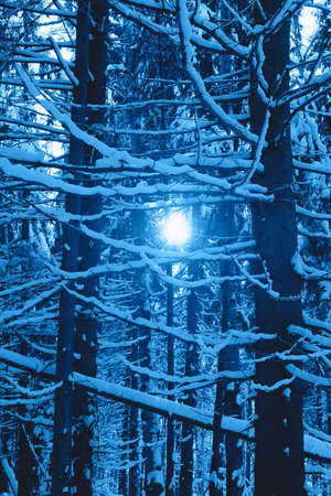 Beautiful winter forest view with sunshine in trendy classic blue color of the year. Banco de Imagens