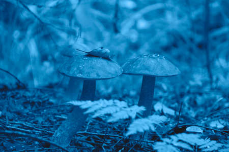 Beautiful picture of a mushroom in the forest in the trendy classic blue color of the year. Reklamní fotografie