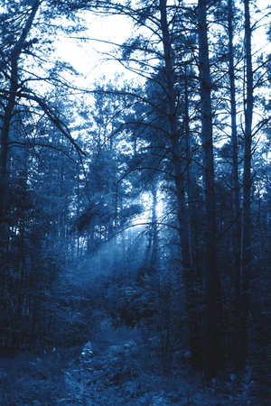 Beautiful and mysterious forest view with the sun beams in the trendy classic blue color of the year.