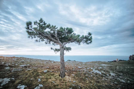 A tree at Ai-Petri plateau in Crimea Stock Photo