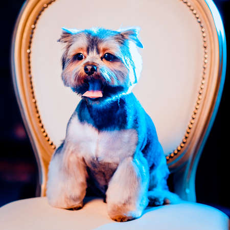 Cute Yorkshire Terrier boy resting on a leather chair after shearing. Toned image. portrait view. square cropping Stock Photo