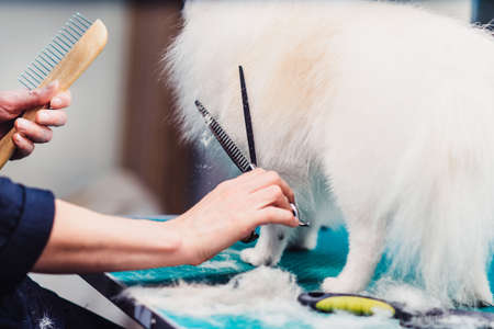The concept of popularizing grooming haircuts and caring for dogs. model haircut of a dogs hair with special scissors close up