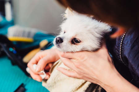 Portrait of a wet dog. Pomeranian dog in the bathroom in the beauty salon for dogs. The concept of popularizing haircuts and caring for dogs. Spitz dog in the washing process. cleaning of the eyes