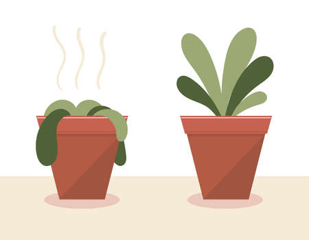 A wilted plant in a pot.The plant came to life.Before and after watering and care.The result of the fertilizer.Flat vector stock illustration