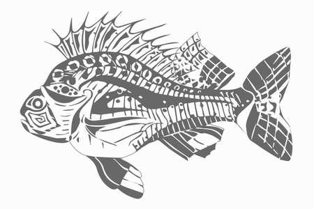 Carp fish grey