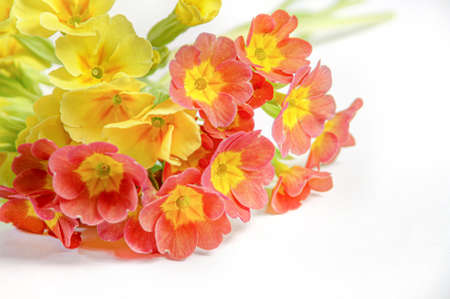 Yellow and orange primrose on a light background. A bouquet of multicolored flowers. Stockfoto