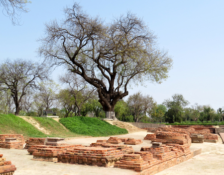 A view of the ruins of ancient Buddhist stupas and old large tree in Sarnath, the place of the first sermon of the Buddha, India