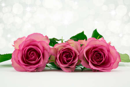 diffused: Three pale pink roses with soft diffused background