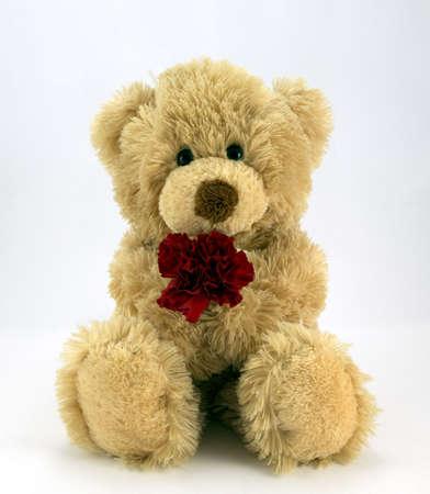 valentine s day teddy bear: Cute teddy holding a red carnation