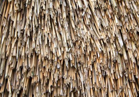 thatch: Closeup of straw thatch.