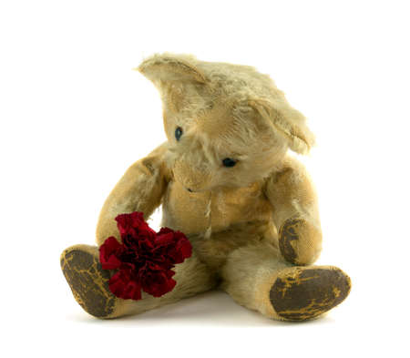 valentine s day teddy bear: Teddy with red carnation