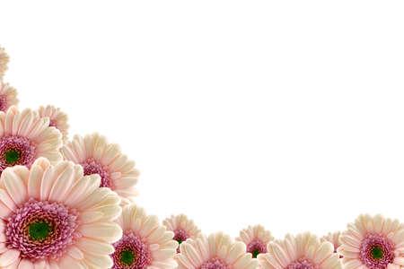 daises: Pink gerberas Stock Photo