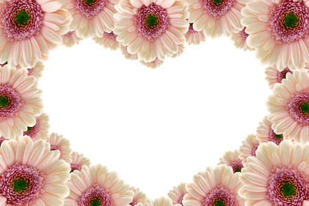 Pink gerbera flower heart photo