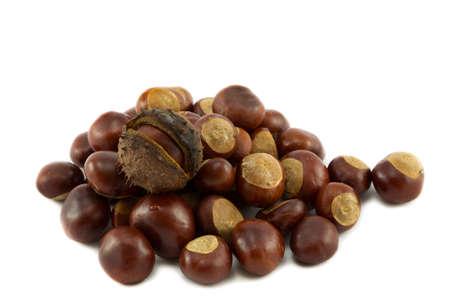 conker: Horse chestnut or conker