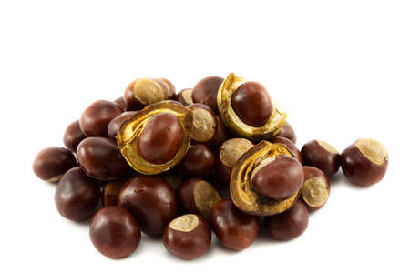 horse chestnuts: Horse chestnuts or conkers