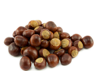 horse chestnuts: Conkers or Horse chestnuts Stock Photo