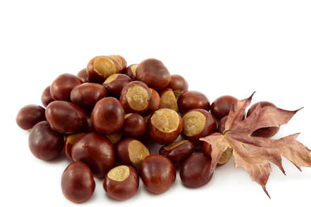 conkers: Autumn Conkers